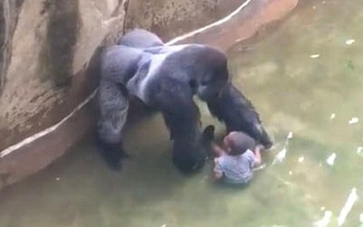 What the Killing of Harambe the Gorilla Reveals About Our Culture of Fear